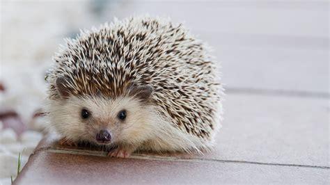 baby animal animals cutest pets