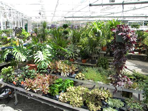 Delhi Garden Center by Green Up Your Home Delhi