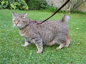 5 big house cats infobarrel