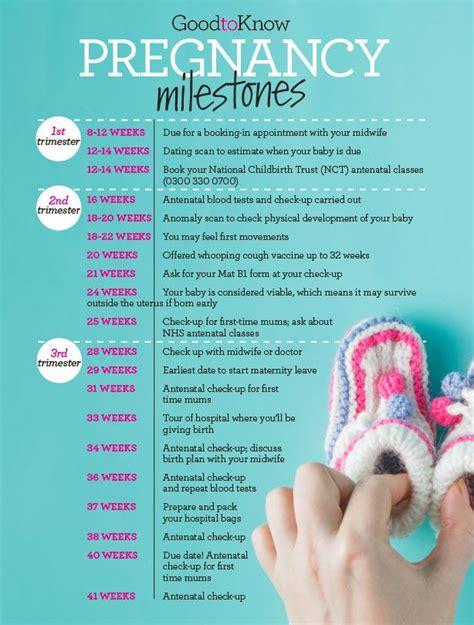 pregnancy timeline 25 best ideas about pregnancy calendar on pregnancy months pregnancy