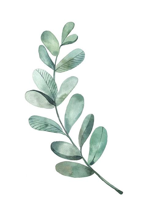 25 best ideas about leaf illustration on watercolor leaves plant illustration and