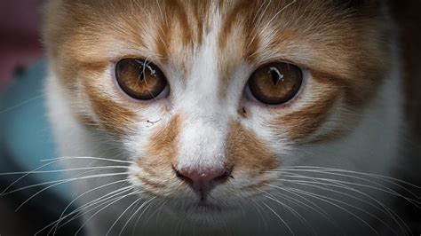 what happens if you cut a s whiskers things everyone gets wrong about cats