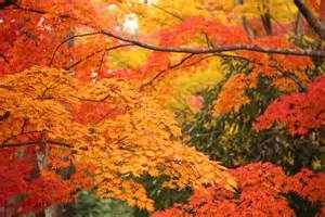 colorful leaves file colorful leaves in showa kinen park jpg