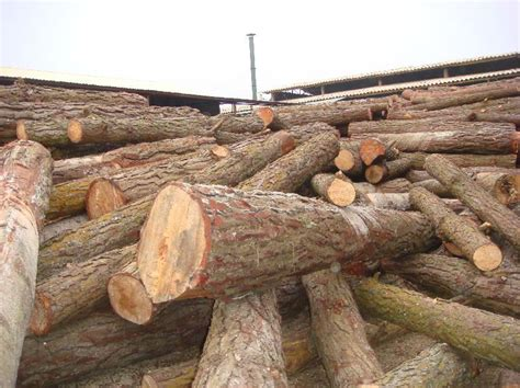 2019 2020 Best Price Raw Pine Lumber Timber Wood With