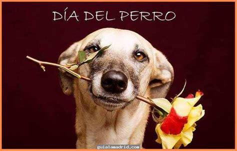 dias de perros el hermosas im 225 genes para descargar de perros en el d 237 a internacional del perro callejero
