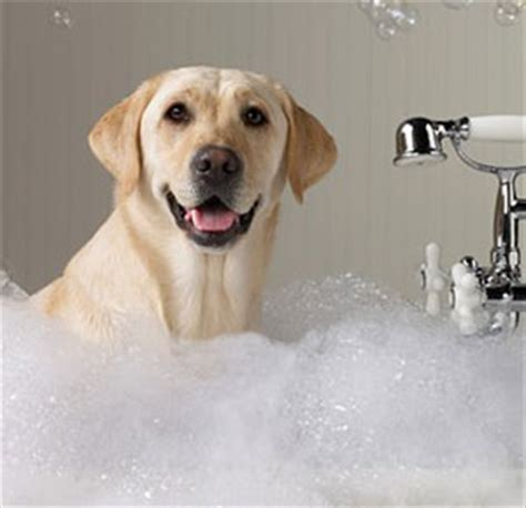 bathtub dog dog bathing services from bed biscuit austin tx