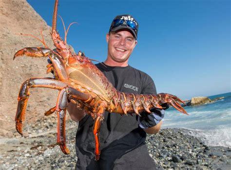 california recreational spiny lobster season  open
