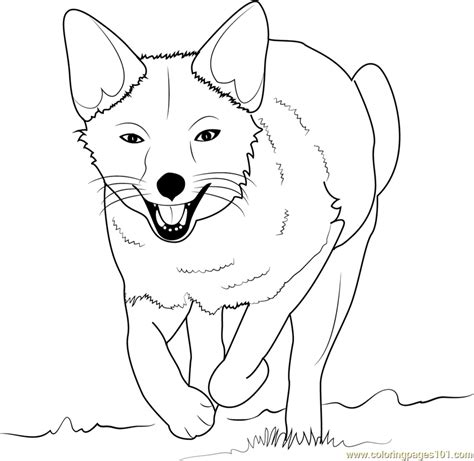 coloring page of a fox face fox coloring pages printable coloring pages of foxes fox
