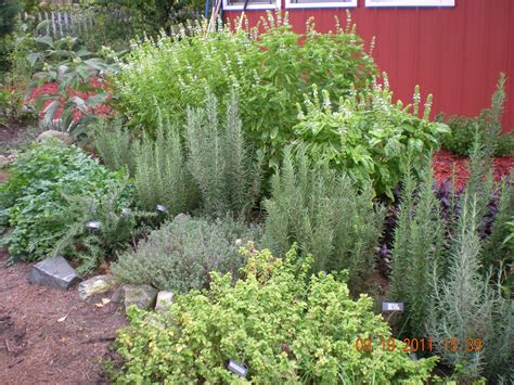 backyard herbs image gallery herb garden