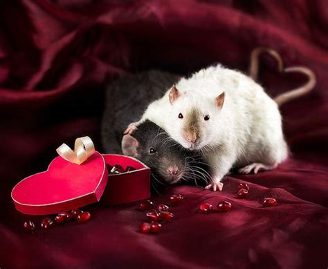 valentines day animals extremely valentines day animals and animals
