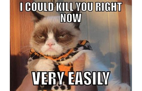 Killing Meme - i will kill you cat meme www imgkid com the image kid