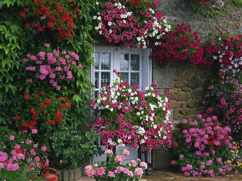 French Cottage Garden Flowers Galore Gardens And Flowers For A Cottage Garden