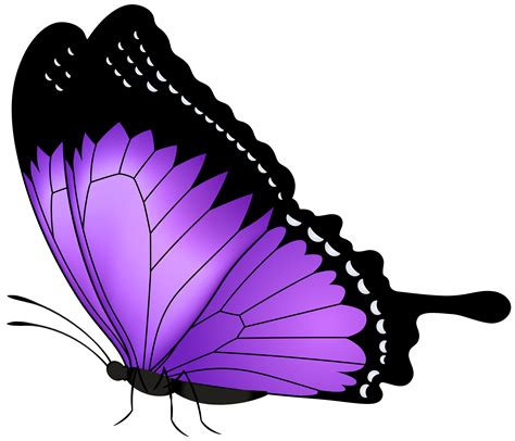 purple butterfly transparent png clip art image gallery