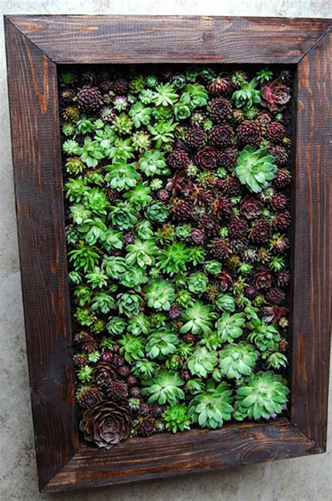 the 25 best succulent wall gardens ideas on