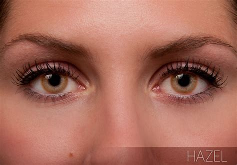 freshlook color contacts freshlook colors contact lenses clearlycontacts ca