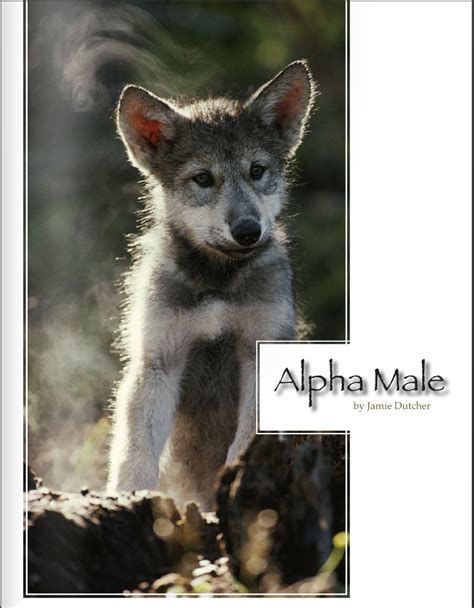 what is a wolf the alpha living with wolves