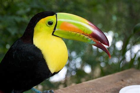 google images birds tropical bird google search birds of beauty pinterest