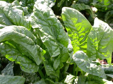 popular garden vegetables top 10 vegetables for st louis