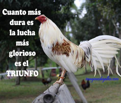 imagenes gratis de gallos con frases fotos de gallos con textos bonitos imagenes de gallos