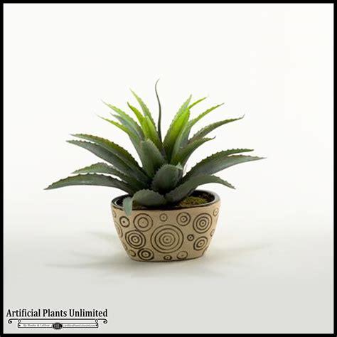 ceramic succulent planter the best 28 images of ceramic succulent planter ceramic