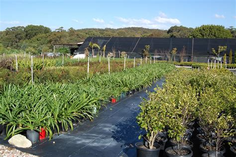 Wholesale Gardens by Powderworks Nursery Best Plants On The Northern Beaches