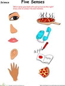 sort out the five senses worksheet education com