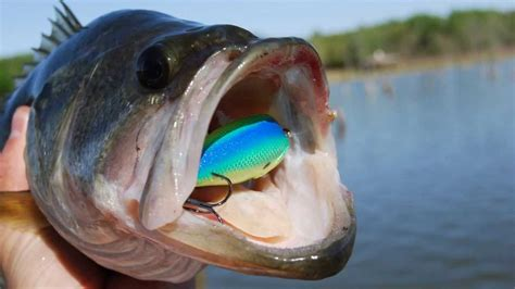 spawning bass crankbait fishing tip speed cranking