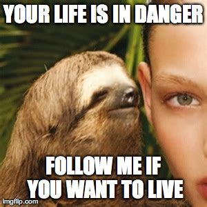 Sloth Meme Whisper - sloth meme whisper your life is in danger follow me if you
