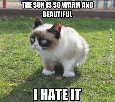 Sexy Cat Memes - grumpy in the sun fun cat pictures