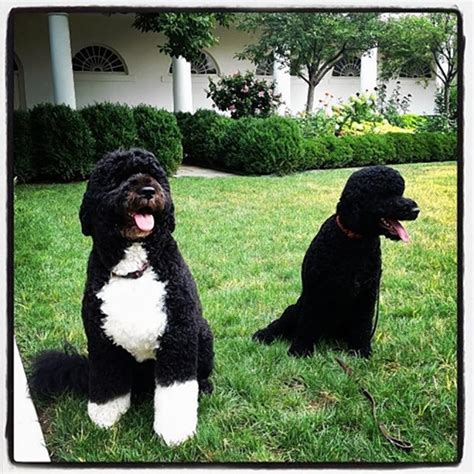white house dog hardly a dog s life for two pooches named sunny ny daily news