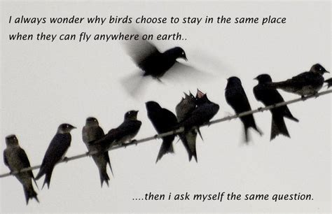 birds quotes sayings images page 32