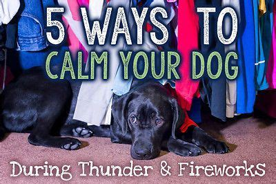 how to calm dogs during fireworks 5 ways to calm your during thunder fireworks