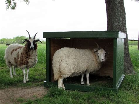 building a mobile building a mobile sheep shelter countryside network