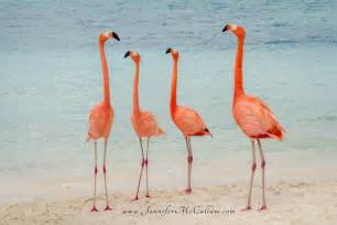 Perfect Beach Chair Flamingos On The Beach Aruba Renaissance