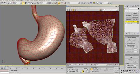 section 48 2 review digestive system 3ds max human stomach