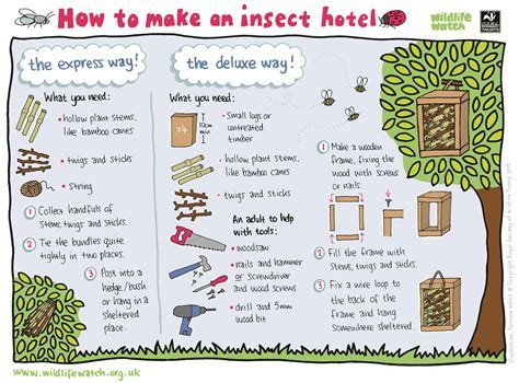 Save our bees! Things you can do at home to help bees