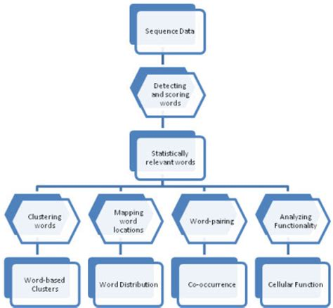coding flowchart process flowchart methodology flow applied for the