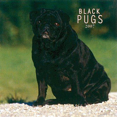 black pug price dogs pug black 2006 calendar review compare prices buy