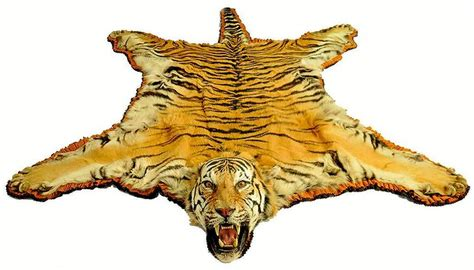 tiger skin rug for sale bengal tiger in the s kaboom