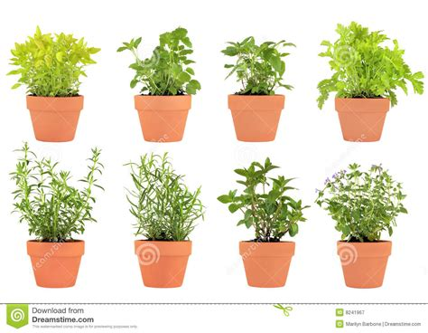 herb pots herbs in pots royalty free stock photography image 8241967