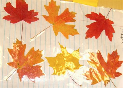 why do leaves change color in autumn teaching science with lynda autumn leaf experiment why do