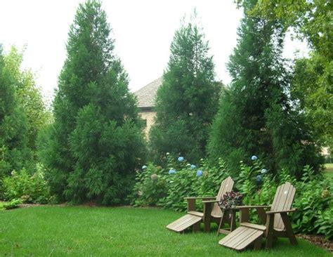 privacy plantings  charlotte nc landscape services