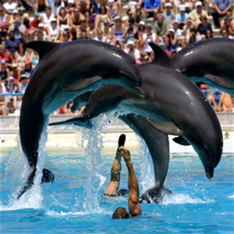 precio entrada zoo de barcelona zoo aquarium de madrid madrid entradas el corte ingl 233 s