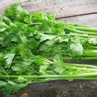 informasi tentang daun herbal  khasiatnya