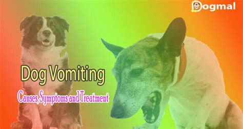 diarrhea and vomiting in dogs vomiting causes symptoms and treatment