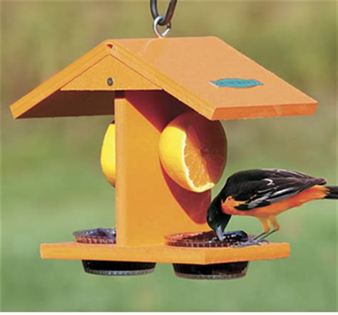 How To Make An Oriole Bird Feeder plans to build oriole bird feeder patterns pdf plans