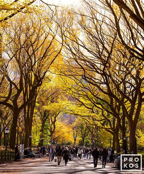 Landscape Architecture License New York Landscape Architect License New York 28 Images Best 25