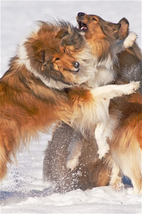 frozen hot dogs last cold weather dog hacks thedogtrainingsecret