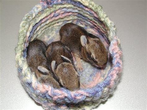 knitting for wildlife make nests crochet for wildlife center wcsv org