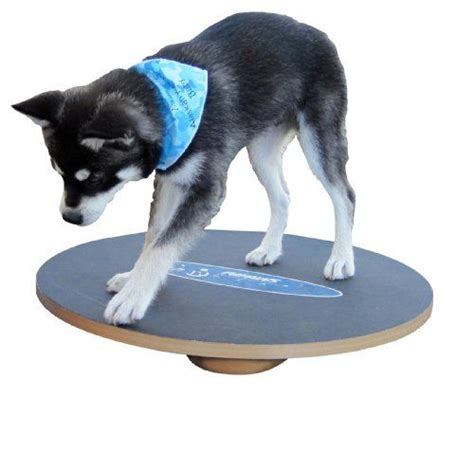 balance puppy 17 best images about behavior infographics